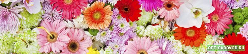 Живые и искусственные цветы на Садоводе