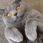Кошки на Садоводе