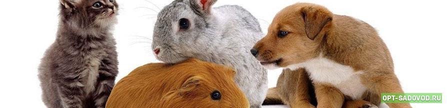 Товары для животных на Садоводе