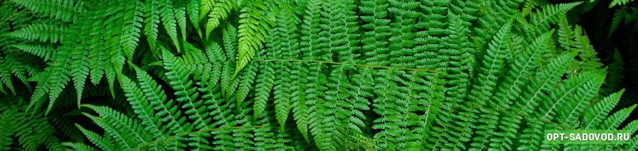 Растения на Садоводе