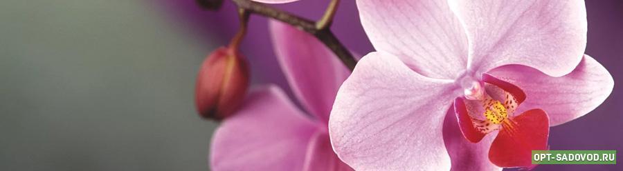 Орхидеи на Садоводе